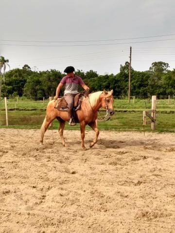 Cavalo qm po - Foto 3