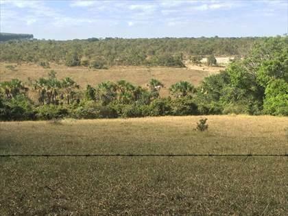 Fazenda à venda, Córrego da Minhoca - Três Marias/MG - Foto 8