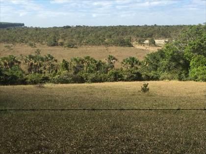 Fazenda à venda, Córrego da Minhoca - Três Marias/MG - Foto 7