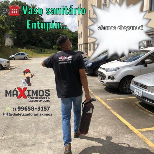 DEDETIZAÇÃO E DESENTUPIMENTOS  - Foto 2