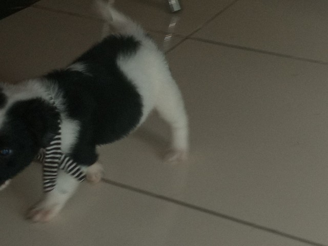 Cachorro macho  - Foto 2