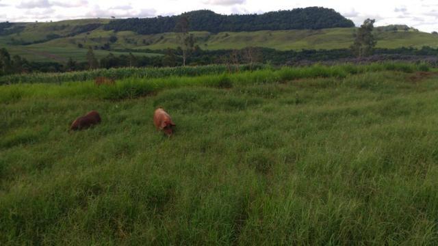 Vila rural em Valinhos , cidade Luiziana - Foto 11