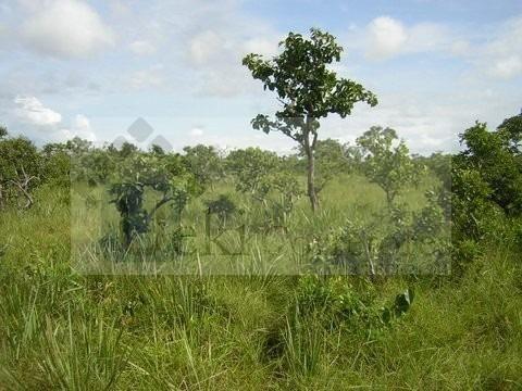 Fazenda no Mato Grosso 5.276 ha venda total - parcial ou permuta - Foto 11