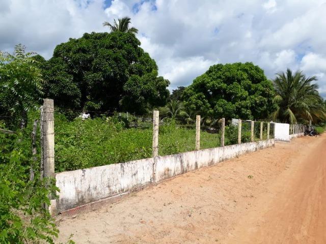 Sítio com 2 hectares - Todo irrigado e produzindo - Foto 3