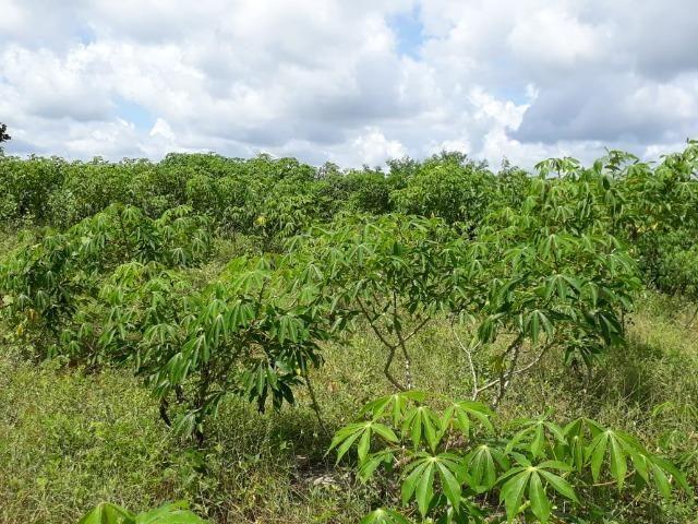 Sítio com 2 hectares - Todo irrigado e produzindo - Foto 11