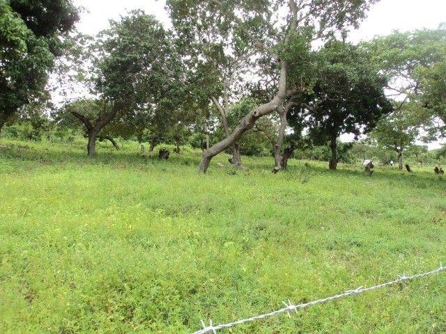 Terreno em Horizonte-Ce - Foto 12