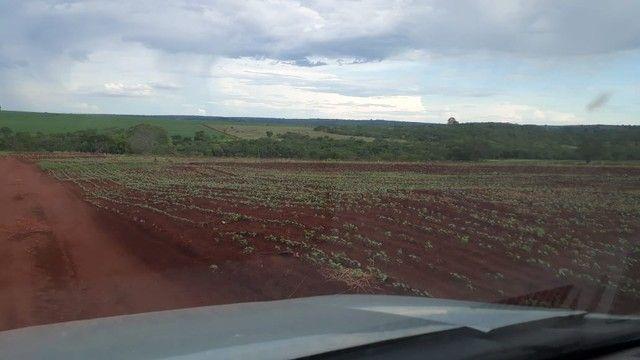 Fazenda dupla aptidão município Ituitataba  - Foto 8