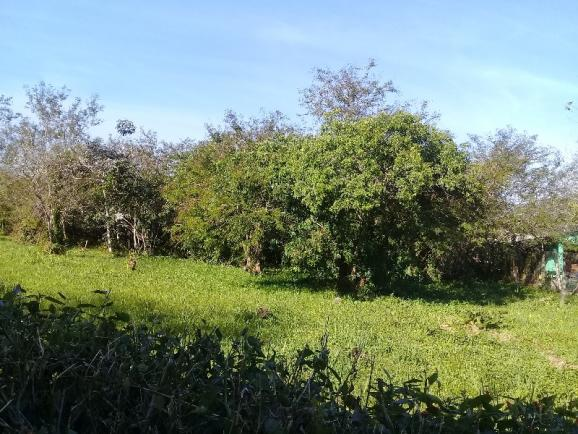 Terreno à venda em Aberta dos morros, Porto alegre cod:TE00014 - Foto 6