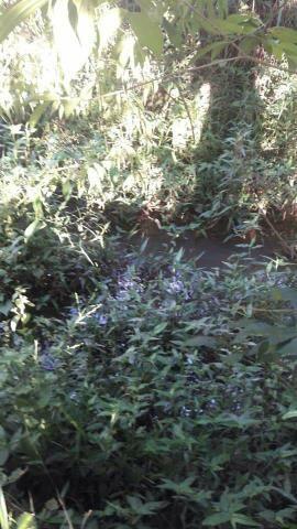 Sítio em esmeraldas muito barato 4700 m2 - Foto 10