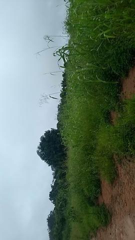 Vendo chácara na linha 11 20 km de cacoal - Foto 6