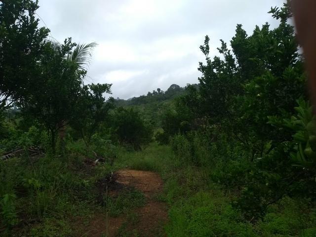 Vendo chácara na linha 11 20 km de cacoal - Foto 13