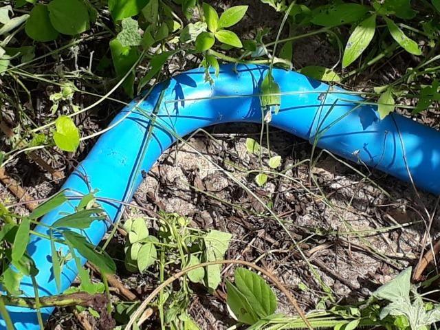 Sítio com 2 hectares - Todo irrigado e produzindo - Foto 13