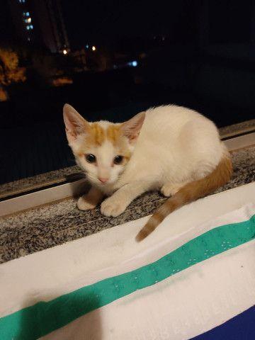Doação de gato filhote ( fêmea) - Foto 2
