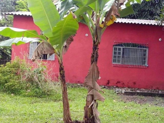 Chácara maravilhosa em Itanhaém-Tiago - Foto 19