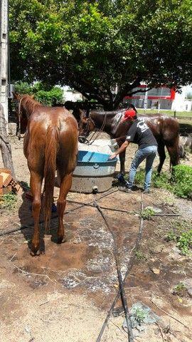Cavalo de vaquejada - Foto 2