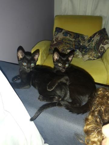 Doa-se lindos gatinhos com vale castração - Foto 3