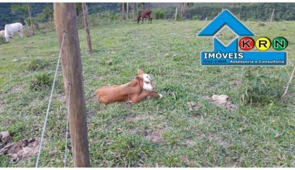 Sitio a Venda no bairro Área Rural - Prudentópolis, PR - Foto 8