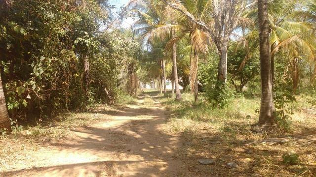 Chácara 5 ha, com Rio 70 km Campo Grande MS - Foto 7