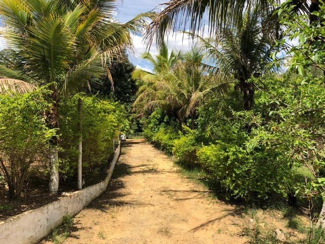 Chácara em Inhapim, 6000 m². Toda murada. Valor 250 mil - Foto 19