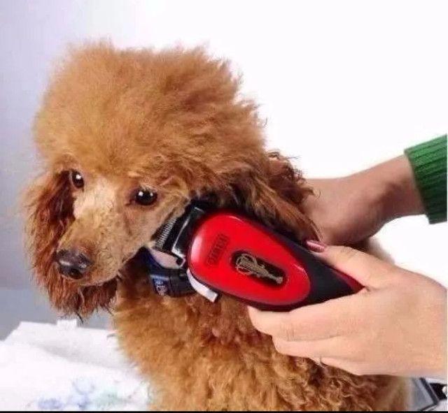 Kit Maquina Tosa Profissional Cães Gatos Pet Cortar Pelos - Foto 3