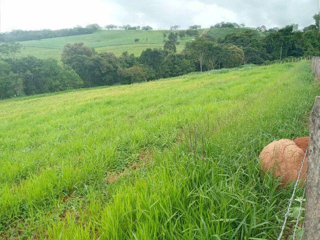 Sítio 20 Alqueires próximo a Pouso Alegre no sul de Minas Gerais  - Foto 4