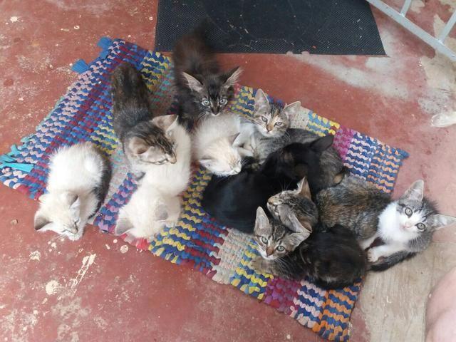 Varios gatinhos para doação