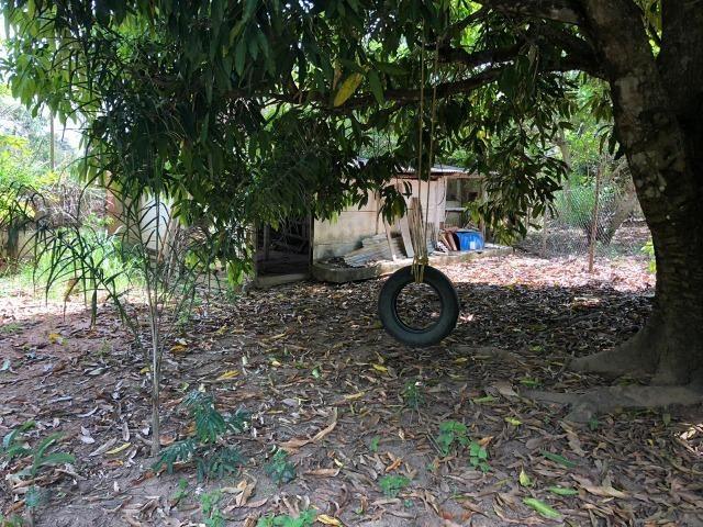 Chácara em Inhapim, 6000 m². Toda murada. Valor 250 mil - Foto 5
