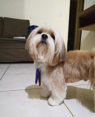Cachorro - Foto 5