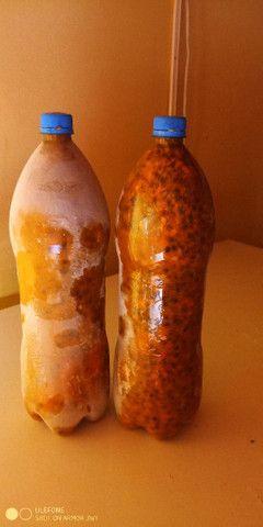 Polpa de maracujá com sementes . 20  reais o litrão de 2  litros - Foto 2
