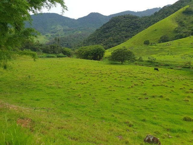 Sítio de 14.5 Alqueires em Maria da Fé - Sul de Minas - Foto 11