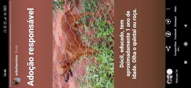 Para adoção responsável - Foto 2