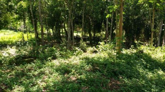 Ótimo sítio em Vale das Pedrinhas - Guapimirim RJ - Foto 2