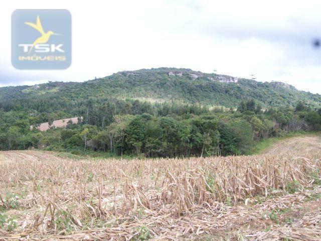 Fazenda em Quitandinha - (Cerrinho) - - Foto 6