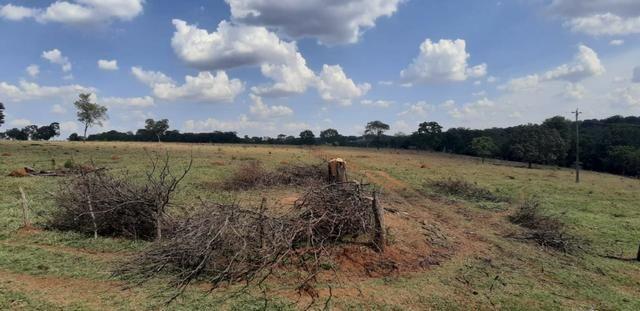 Fazenda a venda em bela vista de goias - Foto 6