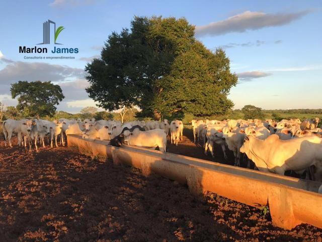 Fazenda em Uruaçu-Go - Foto 14