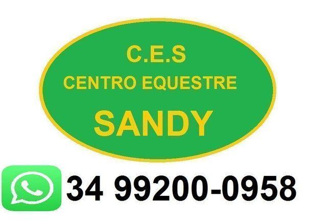 Urgente!! Vendo éguas domadas mangalarga Machador prenhas  - Foto 6