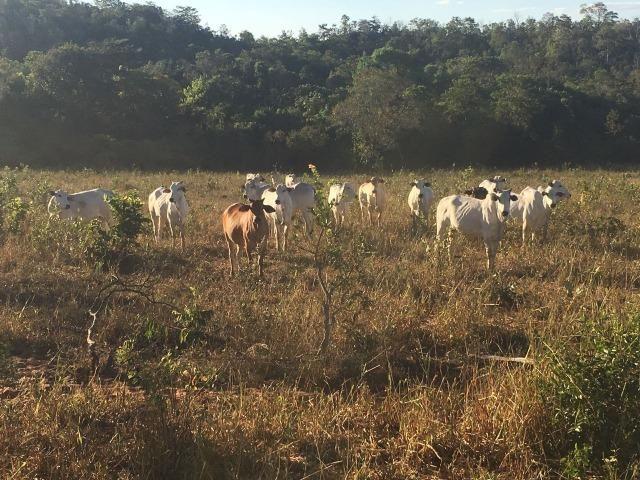 217 hectares, com 150 hectares aberto 32 km de Dom Aquino -MT - Foto 11