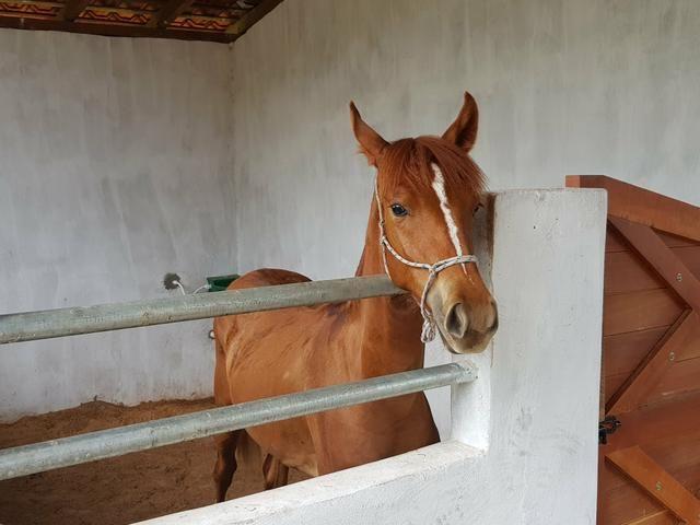 Aluguel de baias para cavalos. R$ 400,00/mês - Foto 4