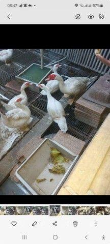 Ovos de gigantes  - Foto 2