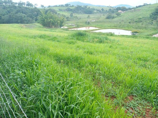 Sítio 20 Alqueires próximo a Pouso Alegre no sul de Minas Gerais  - Foto 10