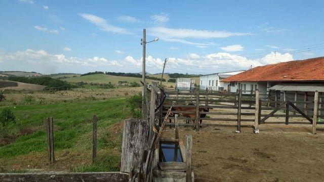 Fazenda com 189,17 Alqueires no Sul de Minas. - Foto 6