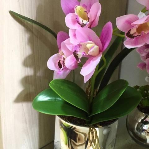Curso de orquídeas para vendas - Foto 2