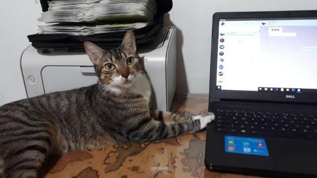 Doação de uma linda gatinha onça