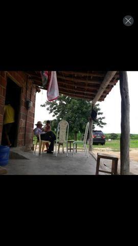 Fazenda em forquilha 130 hectares - Foto 11