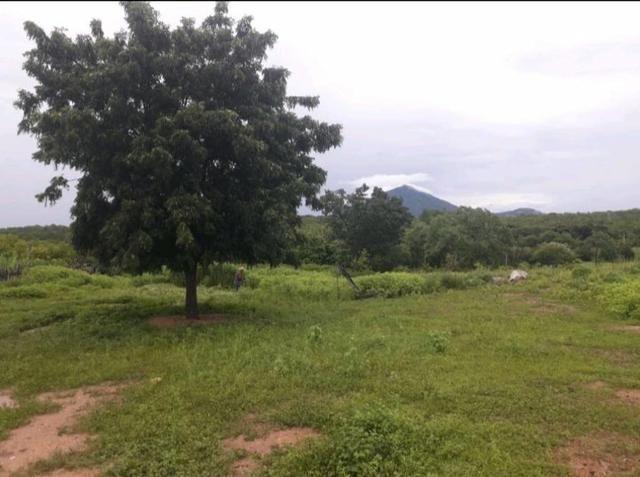 Fazenda em forquilha 130 hectares - Foto 6