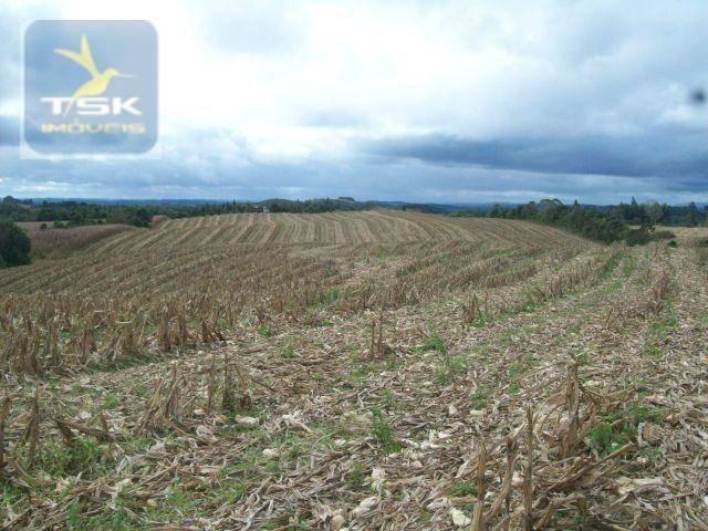 Fazenda em Quitandinha - (Cerrinho) - - Foto 17