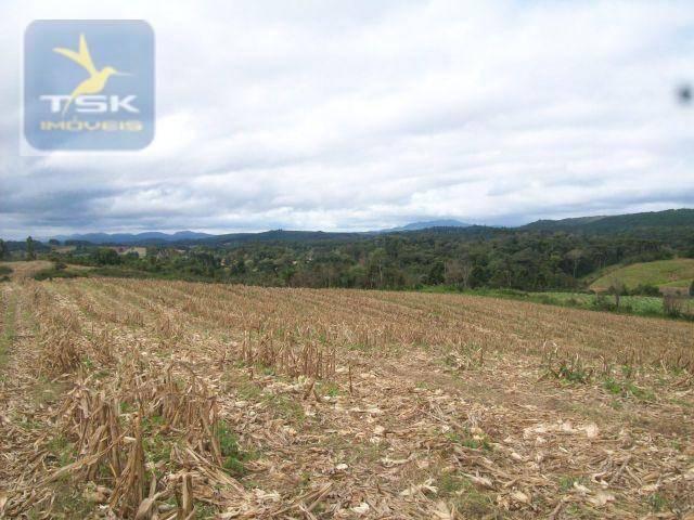 Fazenda em Quitandinha - (Cerrinho) - - Foto 9