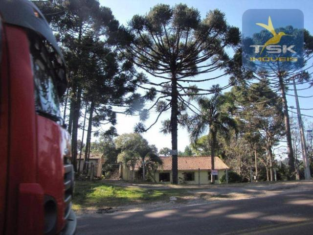 CH0252 - Agudos do Sul Chácara 10.000 m² frente asfalto 2 km da cidade - Foto 2