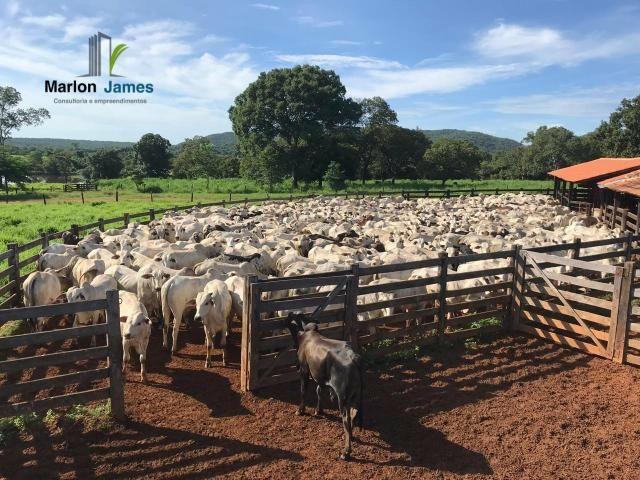Fazenda em Uruaçu-Go - Foto 15