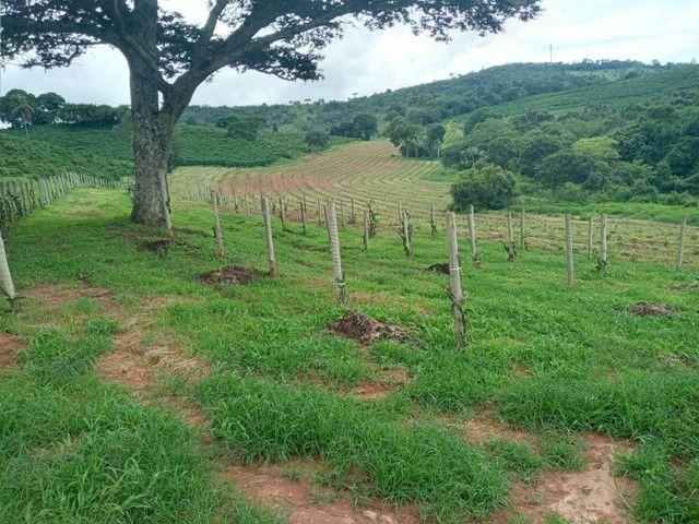 Sítio 20 Alqueires próximo a Pouso Alegre no sul de Minas Gerais  - Foto 8